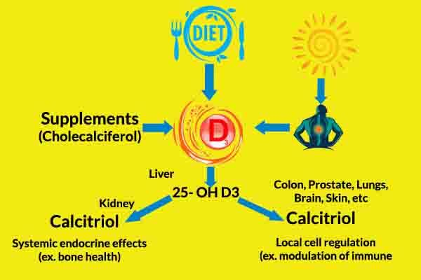 how vitamin d works in the body